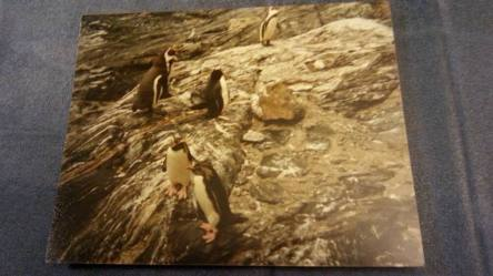 Penguins in a Norwegian zoo
