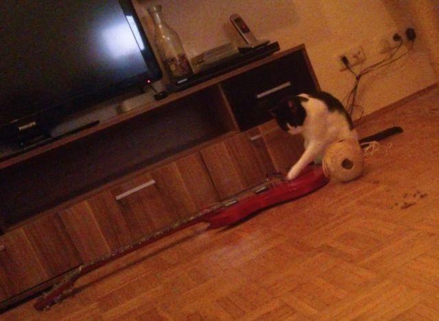 cat and guitar