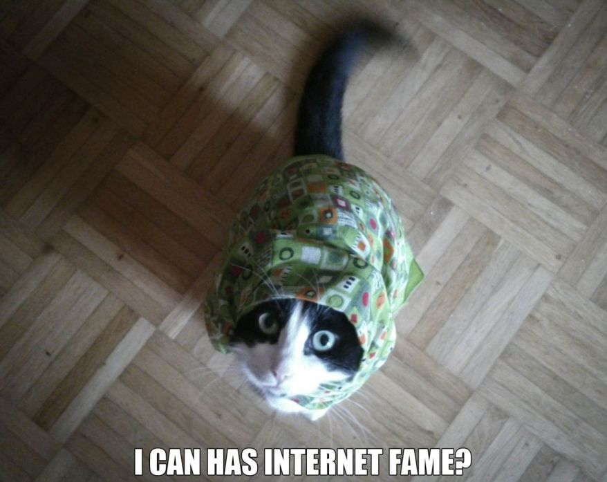 internet meme popularity
