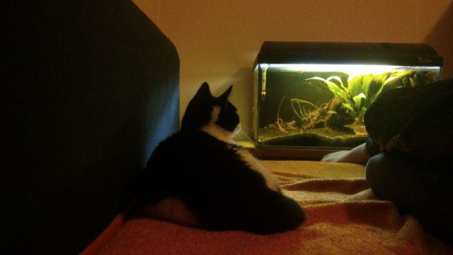 Chill Out Near The Fish Tank