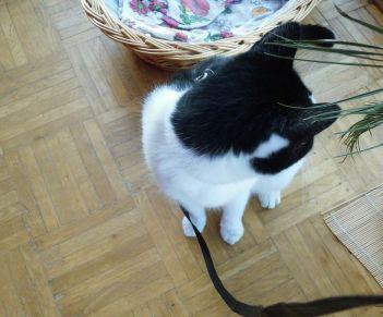 Shyna on the leash 3