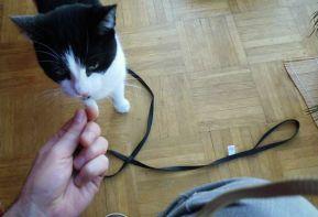 Shyna on the leash 6