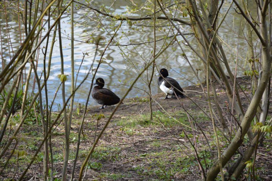 Birds near the pond