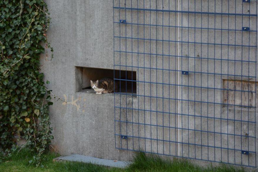 Cat In The Neighborhood