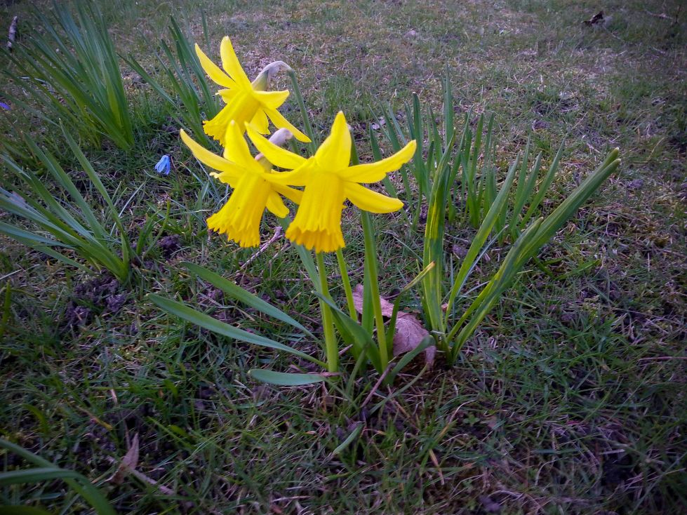 First Spring Flowers Diary Of Dennis