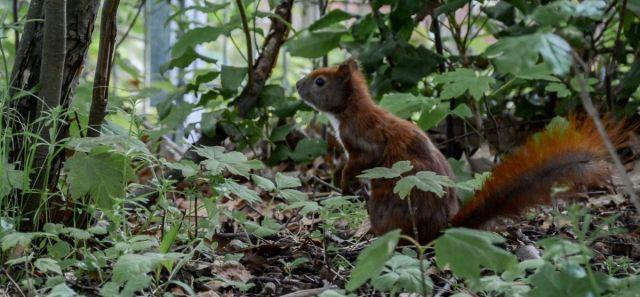 Squirrel Undercover