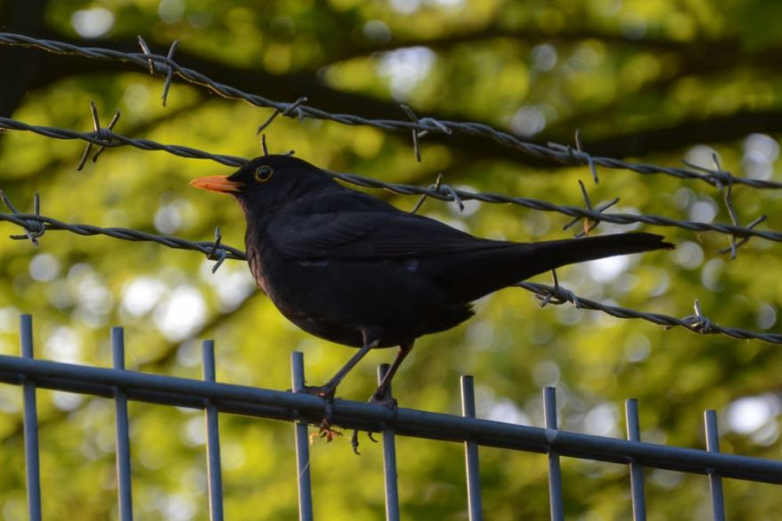 A bird landed on a fence