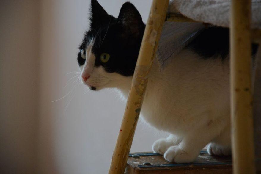 Shyna on a ladder