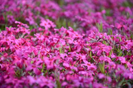 Vivid Flowers 1