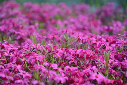 Vivid Flowers 2