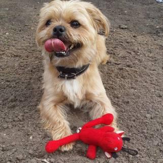 Charlie Dog 1