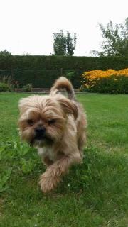 Charlie Dog 3