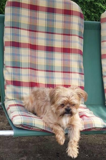 Charlie Dog 6