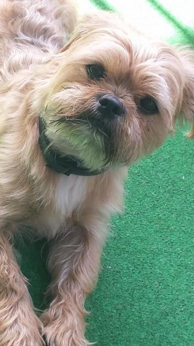 Charlie Dog 8