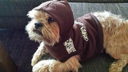 Charlie The Ewok 1