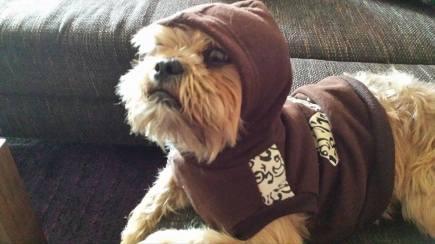Charlie The Ewok 2