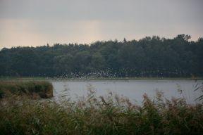 Schellbruch Birds 03