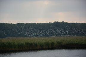 Schellbruch Birds 04