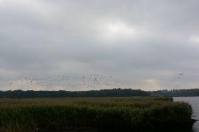 Schellbruch Birds 05