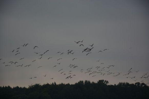 Schellbruch Birds 06