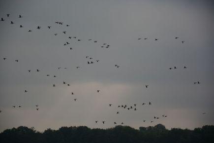Schellbruch Birds 09