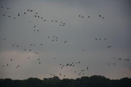 Schellbruch Birds 10