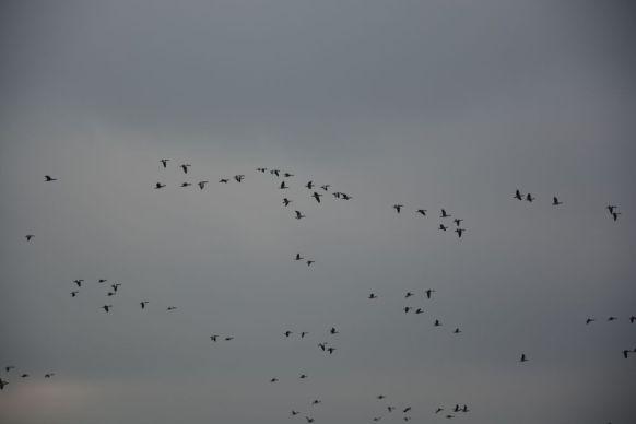 Schellbruch Birds 11