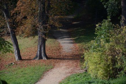 Autumn Photo 1
