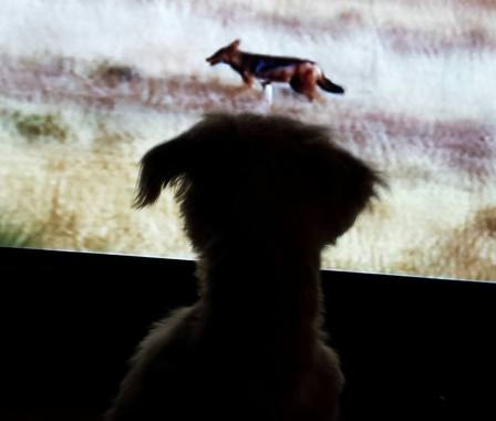 Dog is watching TV 2