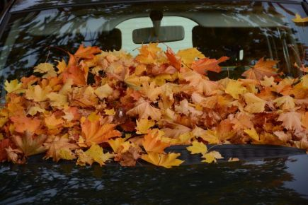 Autumn Photo 4