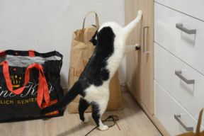 My cat explores the temporary home 2