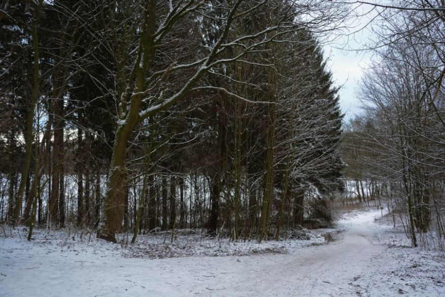 Snow in Reinfeld