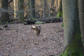 deer photo 3