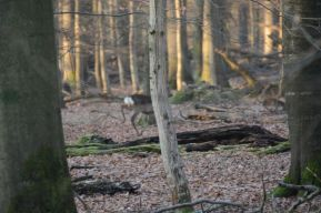 deer photo 4