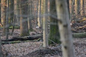 deer photo 5