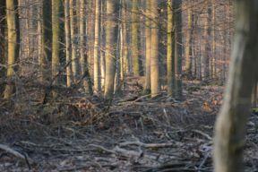 deer photo 6