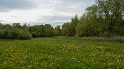 A Beautiful Meadow