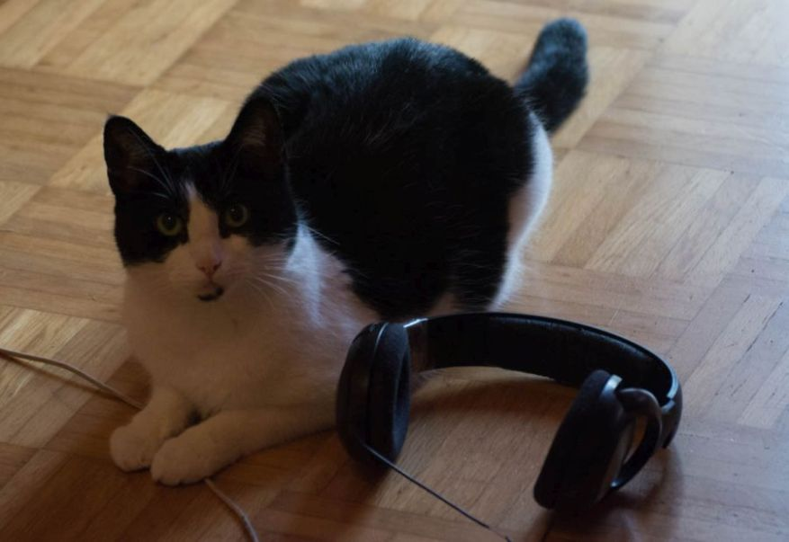 Cat and Headphones