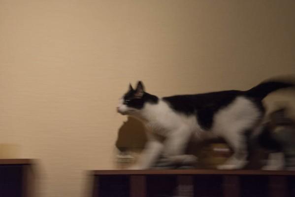 A moth hunting cat 1