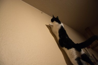 A moth hunting cat 5