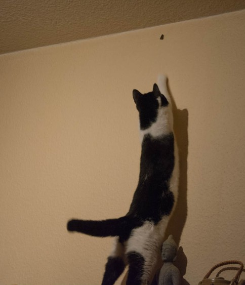 A moth hunting cat 6