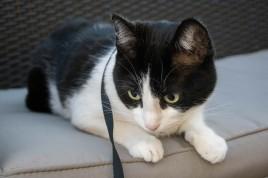 cat-ouside-terrace-quest-snapshot-1