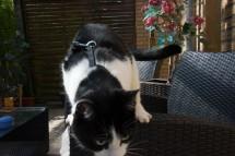 cat-ouside-terrace-quest-snapshot-4
