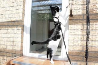 cat-ouside-terrace-quest-snapshot-6