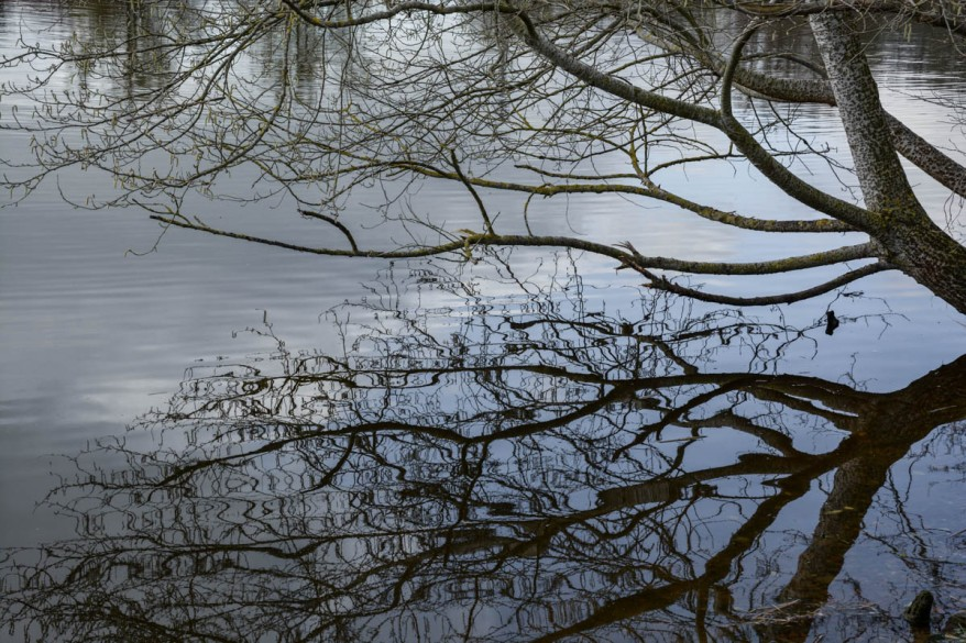 tree-reflection-in-the-water