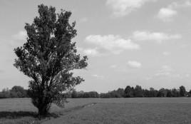 black-and-white-landscape-photo