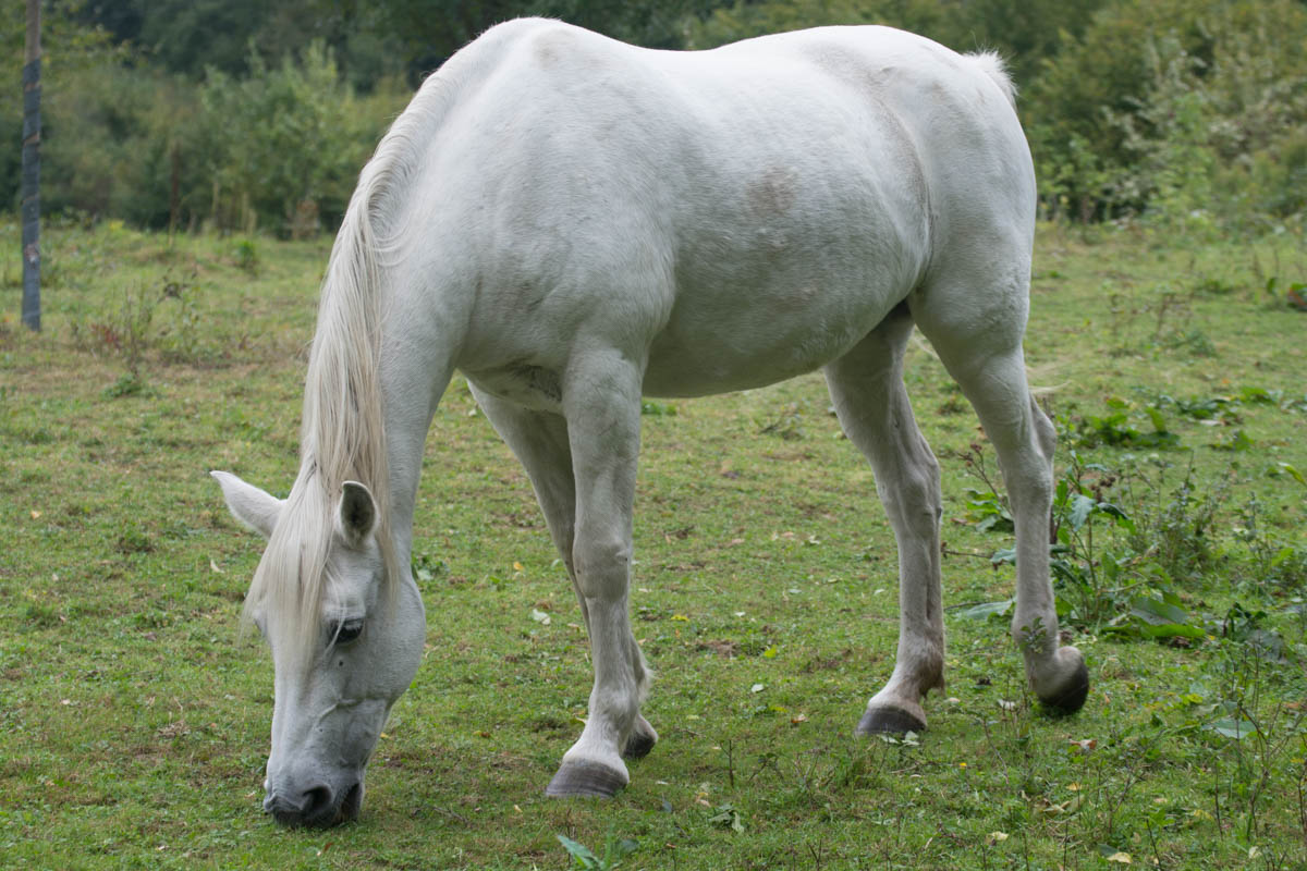 Beautiful White Horse Diary Of Dennis