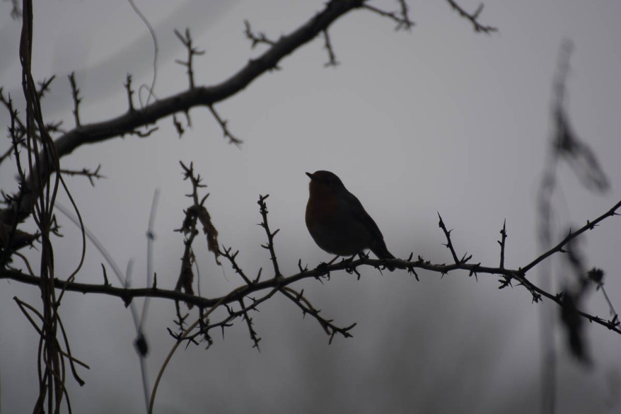 lonely-robin
