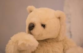 teddy-polar-bear
