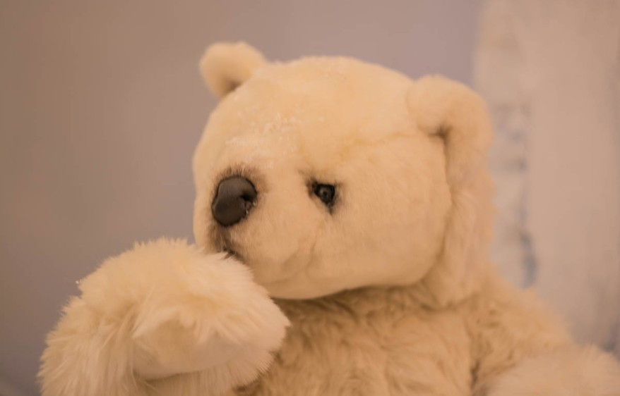teddy-polar-bear